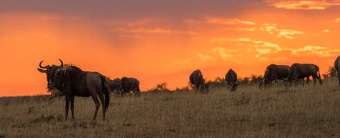 Kenya Safari Fotogràfic